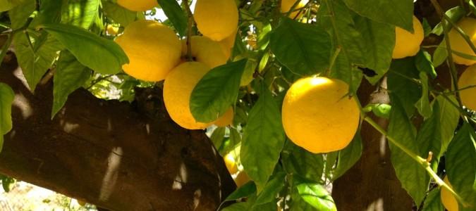 Zumo de Limón en ayunas para combatir la fatiga, el estrés y el cansancio crónico